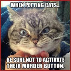 funny cats - when petting cats