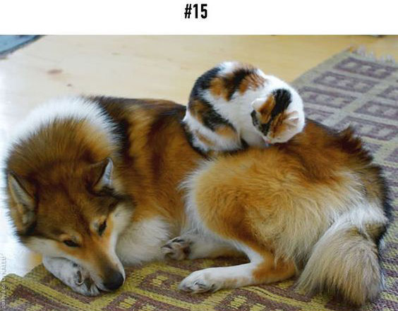 20-animal-brothers-from-other-mothers_15