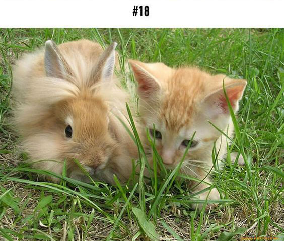 20-animal-brothers-from-other-mothers_18