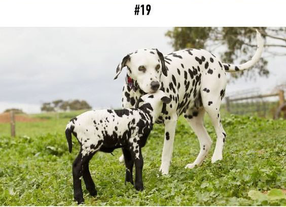 20-animal-brothers-from-other-mothers_19