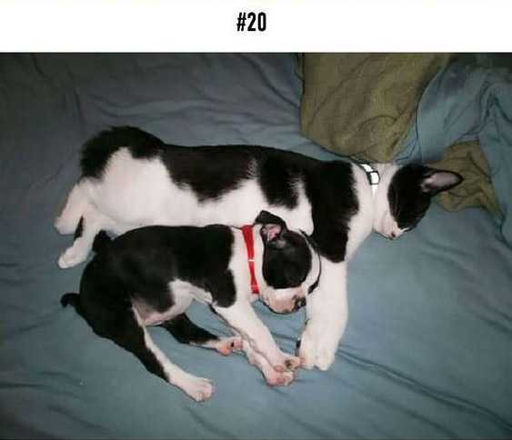 20-animal-brothers-from-other-mothers_20