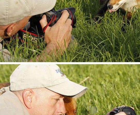 animals photographers 1
