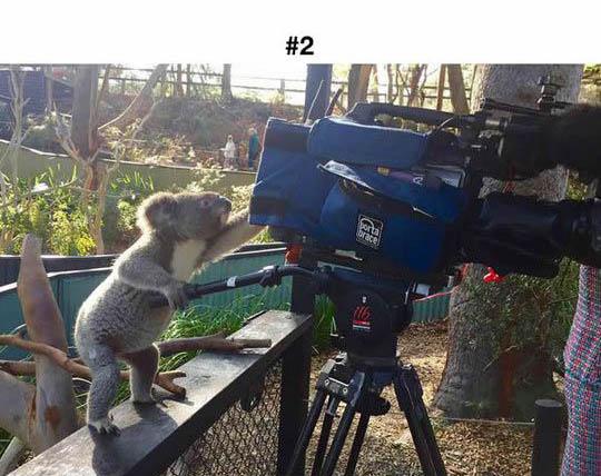 animals photographers 2