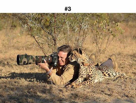animals photographers 3