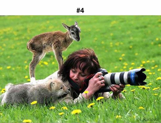 animals photographers 4