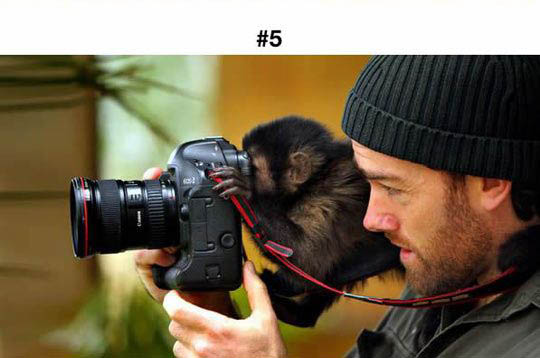 animals photographers 5