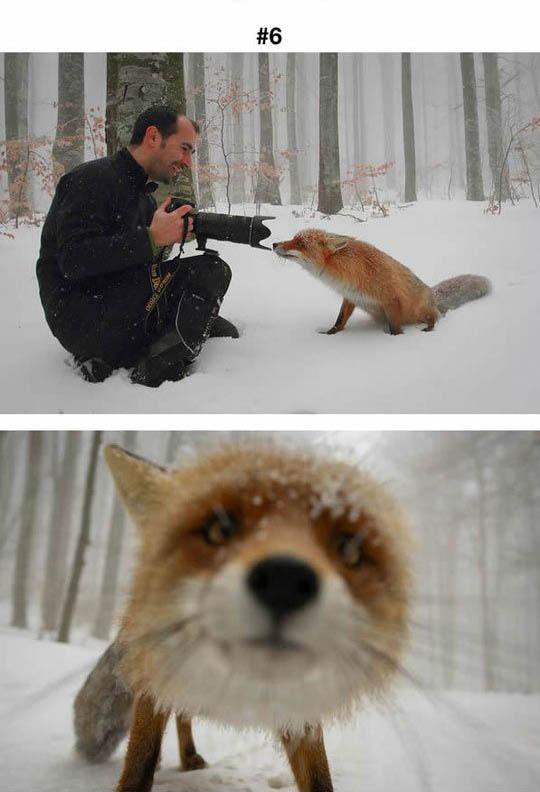 animals photographers 6
