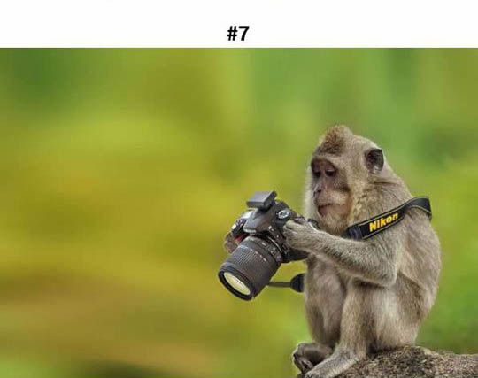 animals photographers 7