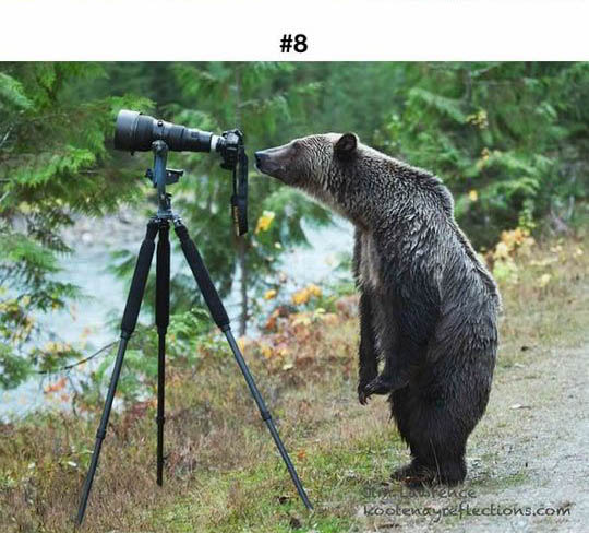 animals photographers 8
