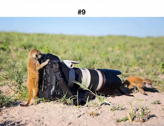 animals photographers 9