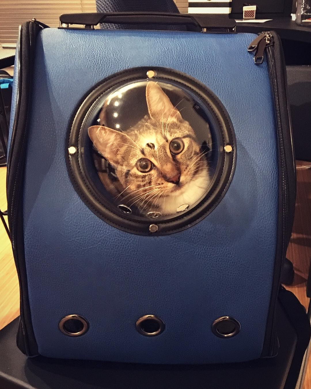 Capsule Cat Carrier Backpack Cat Travel Like An Astronaut