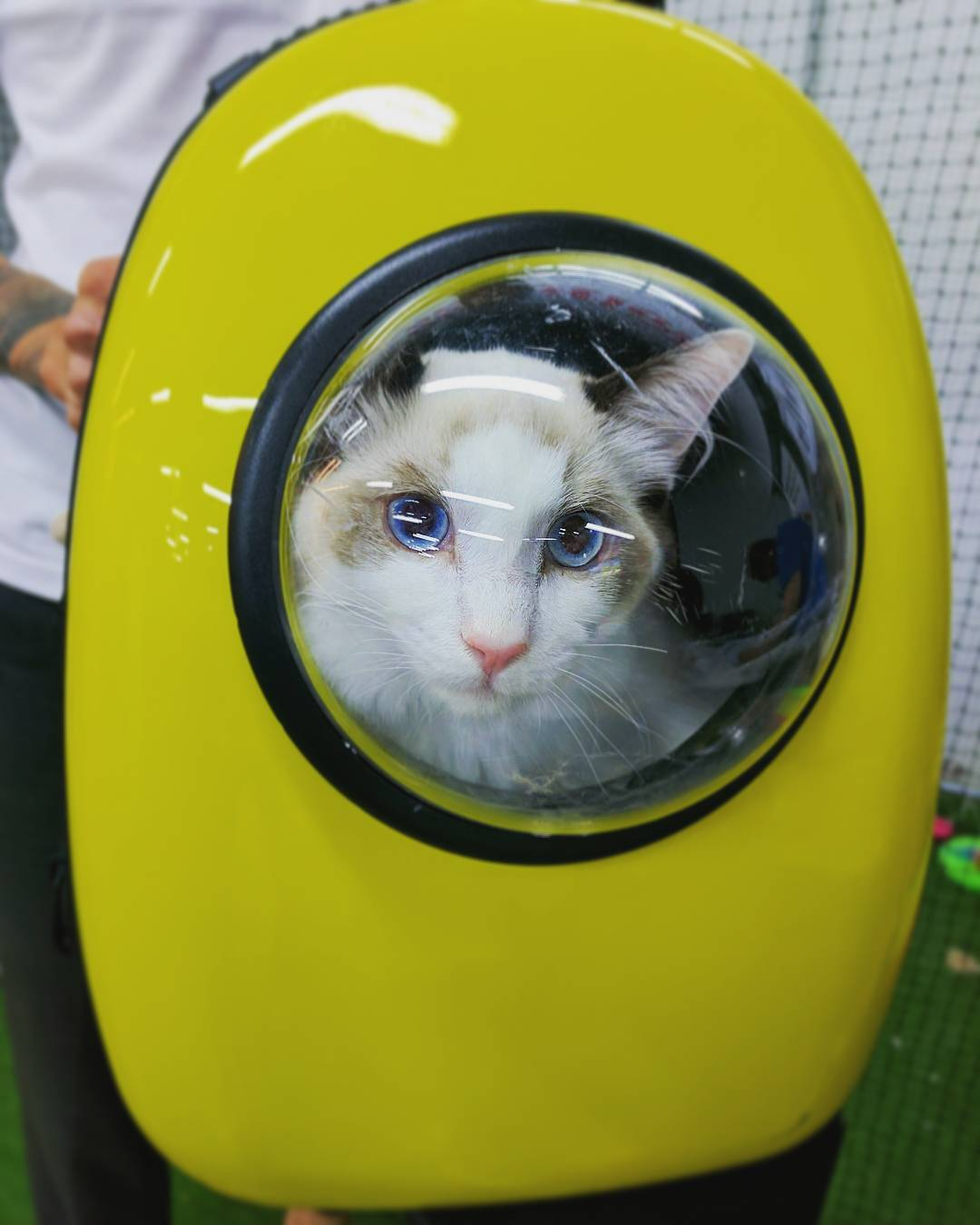 capsule-cat-carrier-backpack-cat-travel-like-an-astronaut-003