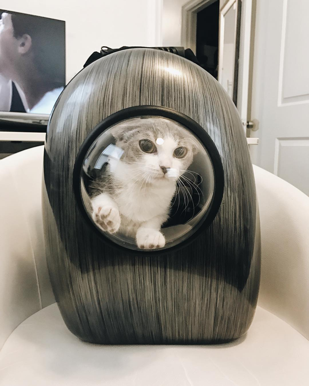 capsule-cat-carrier-backpack-cat-travel-like-an-astronaut-004