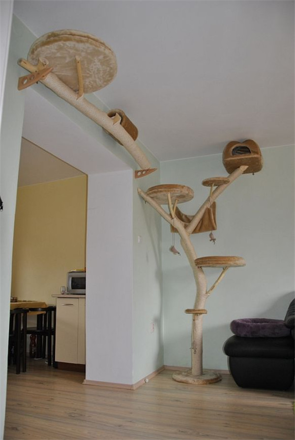 Cool cat trees that look like real trees
