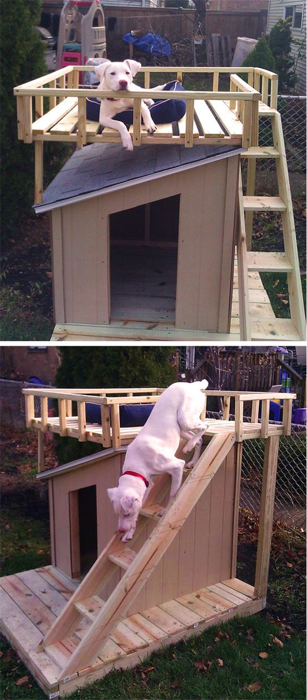 15 Dog Houses That Even Dog Owners Cannot Say No Fallinpets