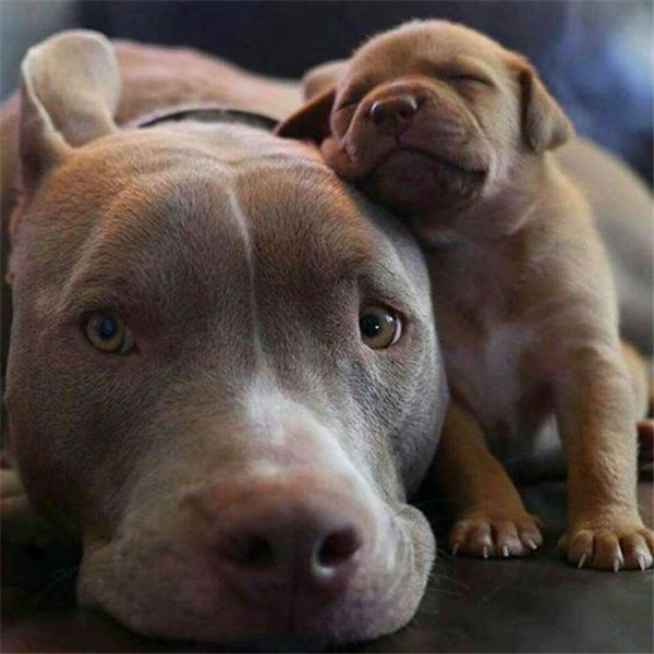 mama dog and her puppy