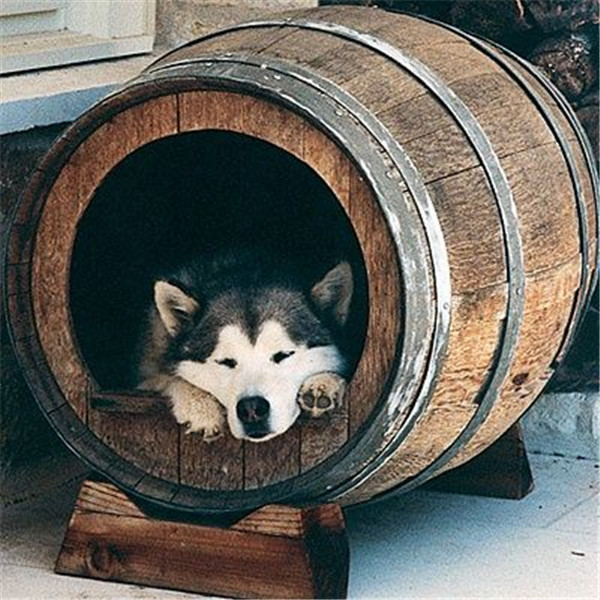 wooden wine barrels dog house