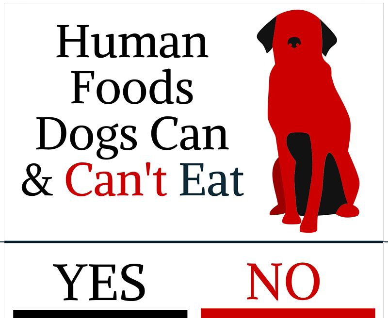 Can Dogs Really Not Have Human Food