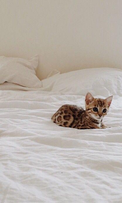 leopard cat sooo cute