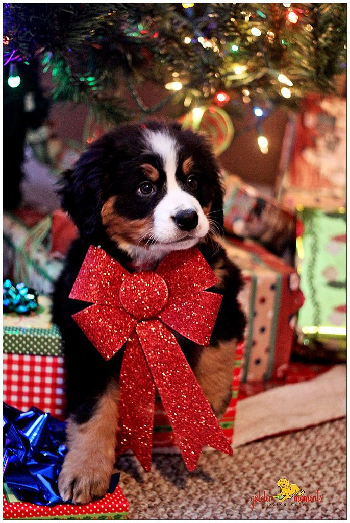 20 welldressed dogs ready for christmas fallinpets
