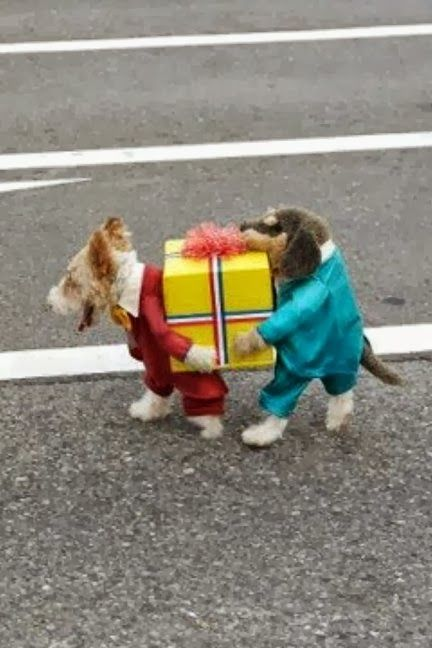 No.3 Creatively Cool Halloween Costumes & 15 Unique and Creative Dog Costumes You Gonna Laugh Out! | FallinPets
