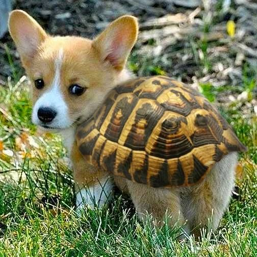 Cute Turtle Pup Of The Day
