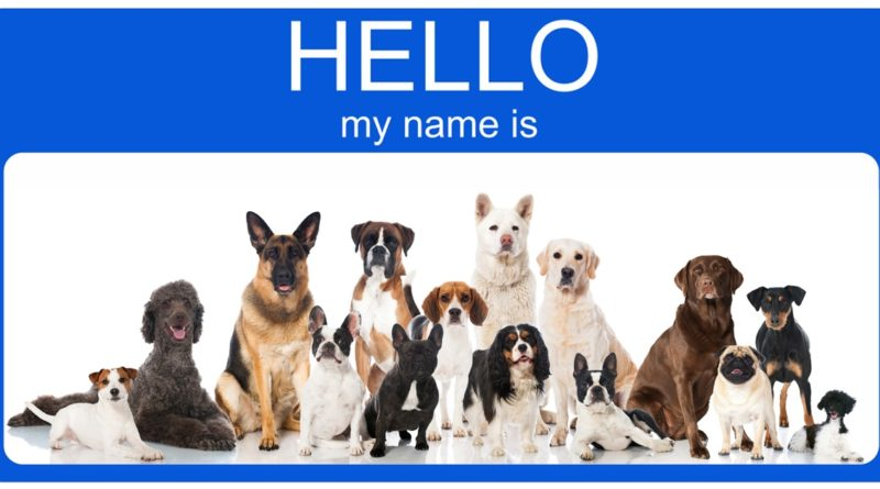 DOG NAME IDEAS