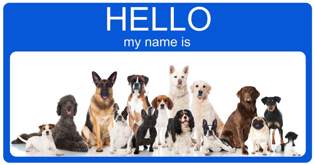 Callie Dog Name