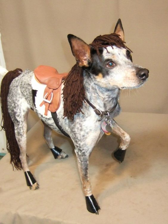 Im a horse dog costume