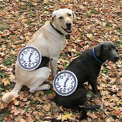 Pet Halloween Costume Contest Watch Dogs