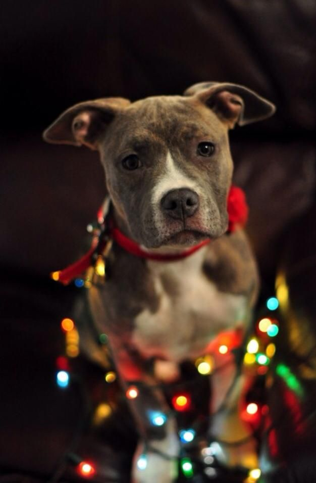 20 Well Dressed Dogs Ready For Christmas Fallinpets