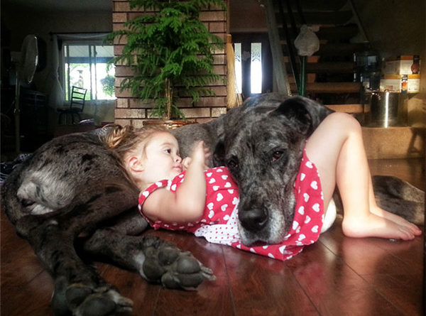 Relationship Between Child And Big Dog