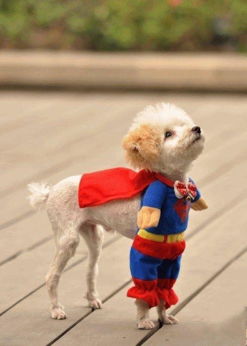 Superdog costume!