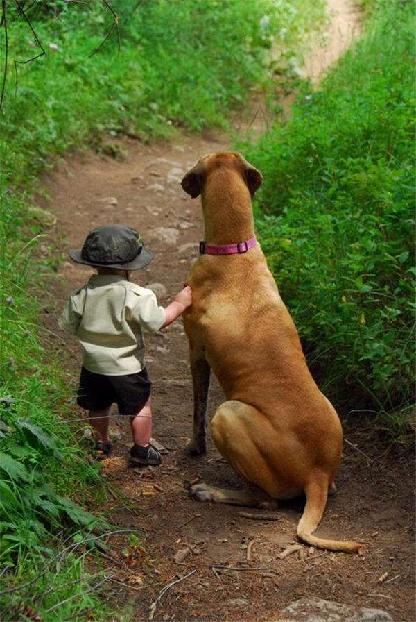The Relationship Between Child And Big Dog