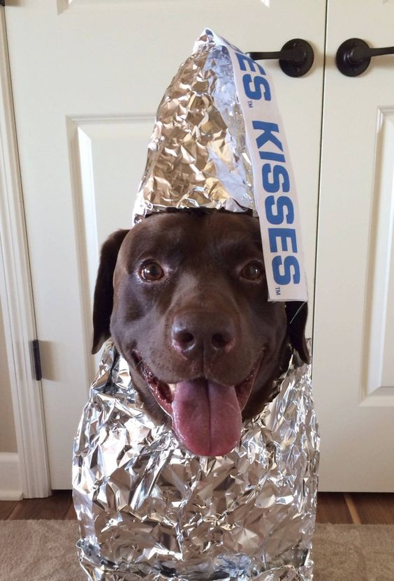 Cute Kisses Dog Costume