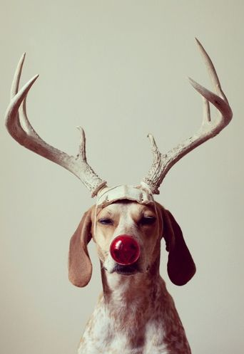 Fake Reindeer With Funny Nose Ball