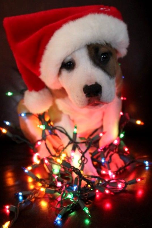 Puppy Stockings Christmas