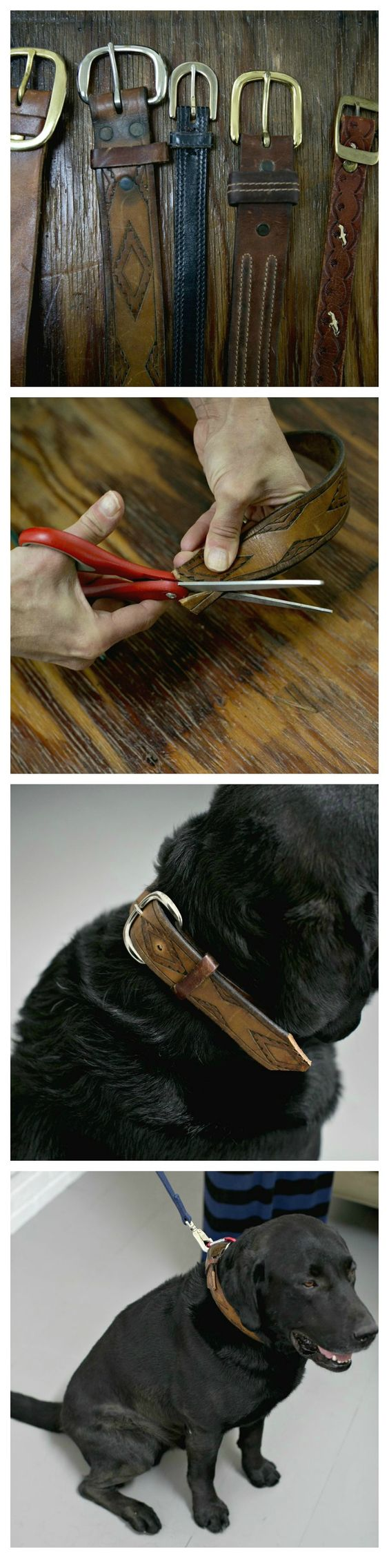 Diy Dog Collar From Vintage Belt