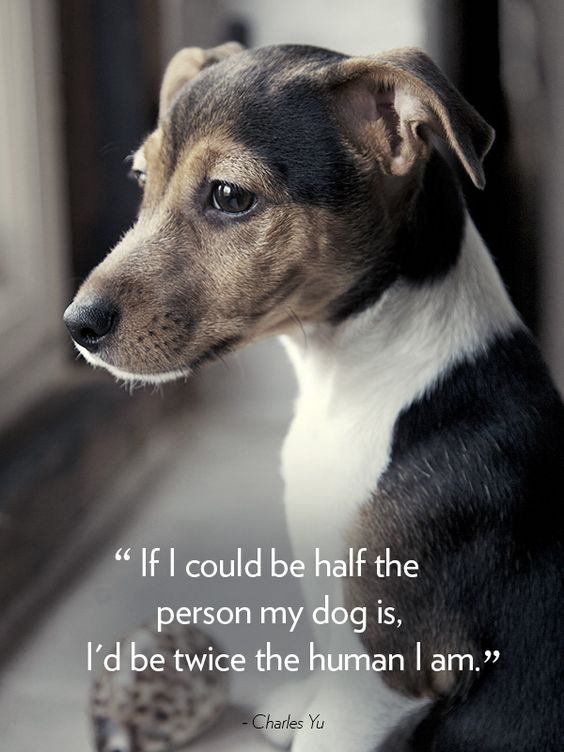 4 Dog Quotes That Will Melt Your Heart