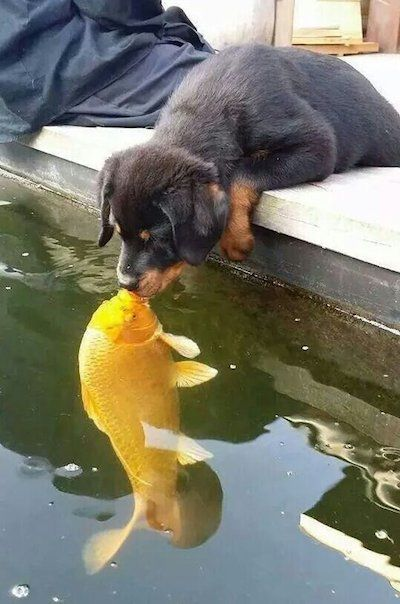 dog and fish most perfectly timed photos