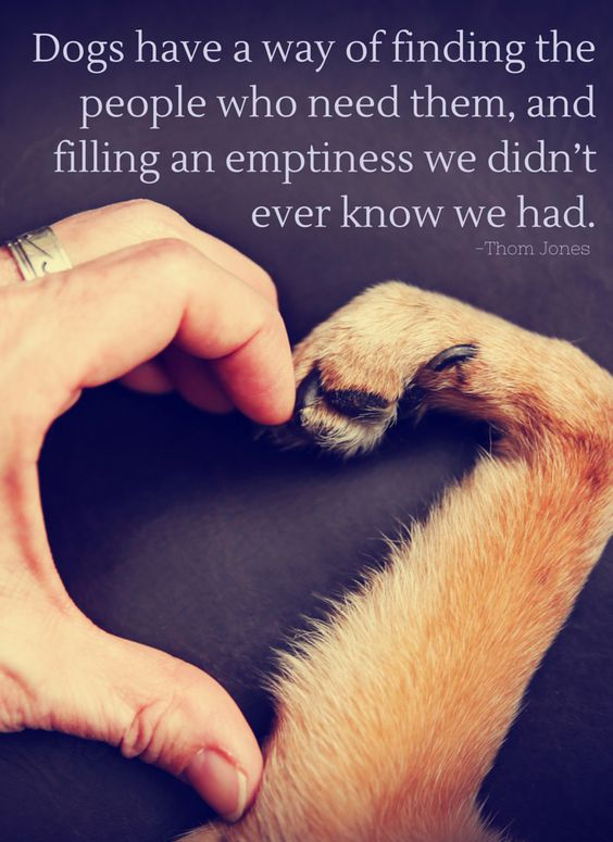 Dogs Have A Way Of Finding The People Who Need Them And Filling An Emptiness We Didnt Ever Know We Had