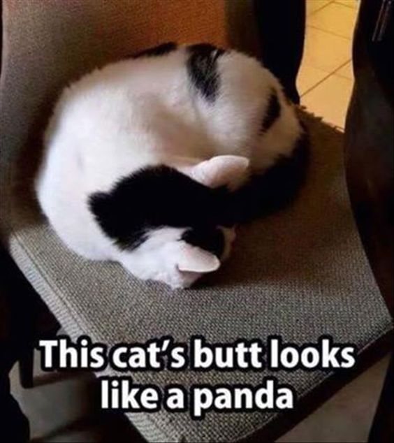 Funny Animal Pictures Of The Day cat.