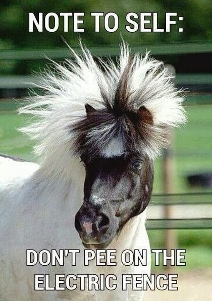 Haha-dont-know-whether-I-should-put-this-in-LOL-OMG-or-Horses