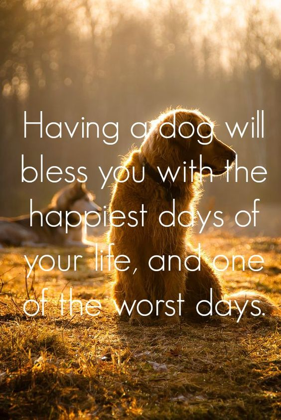 Heart Warming Dog Quotes
