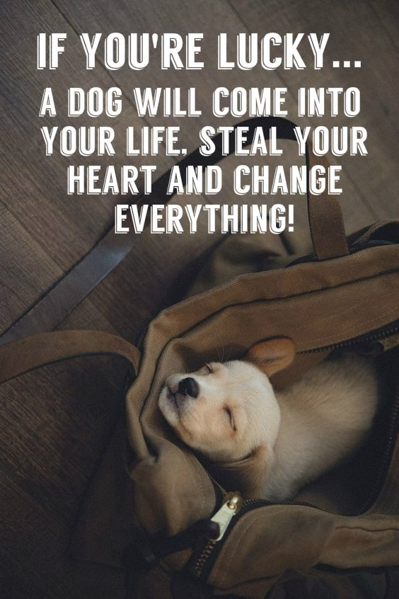 18 Heart-warming Dog Quotes About Life and Love FallinPets