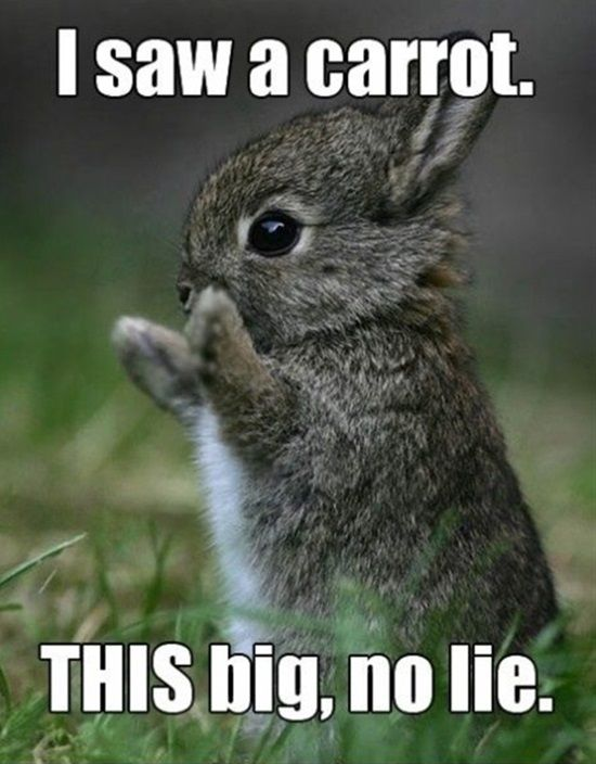 Super Funny Animal Memes More