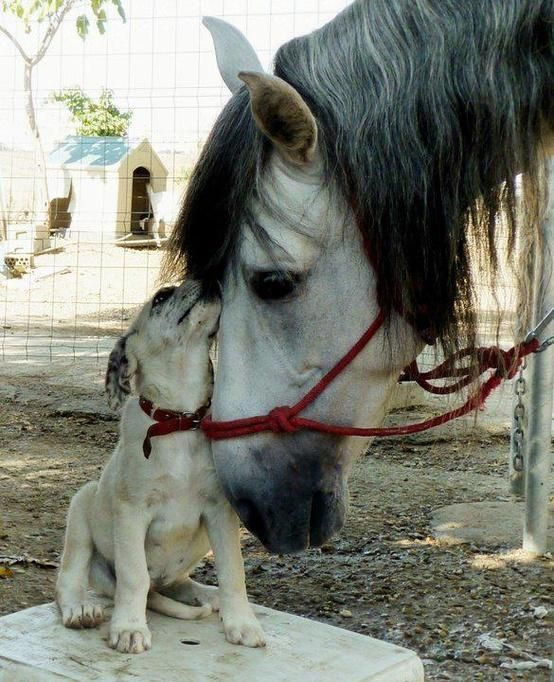 dog and horse friendship