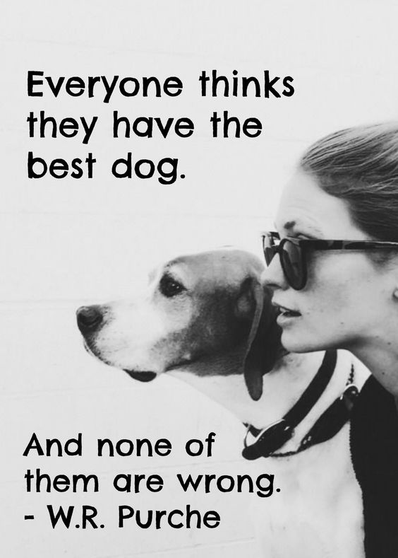 Quotes About Love Dogs : 18 Heart-warming Dog Quotes About Life and Love FallinPets