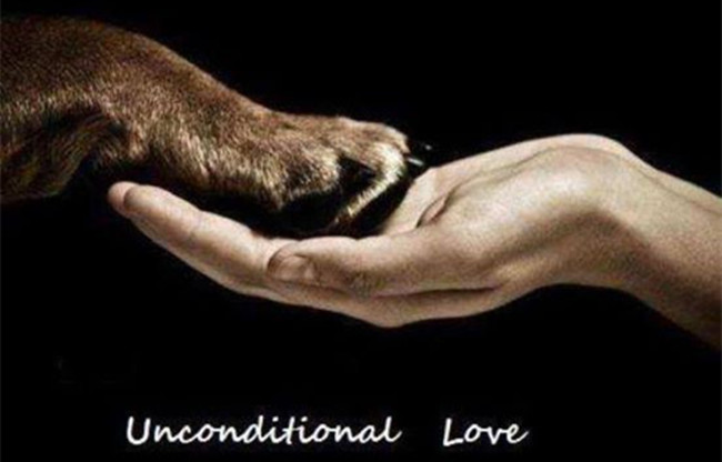 60 Heartwarming Dog Quotes About Life And Love FallinPets Mesmerizing Love Animal Quotes