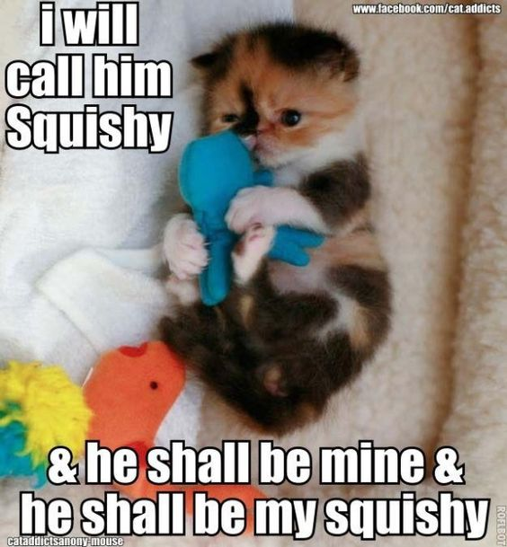 Animals Quotes Adorable 20 Funny Animal Pictures To Get You Out Of A Bad Day  Fallinpets